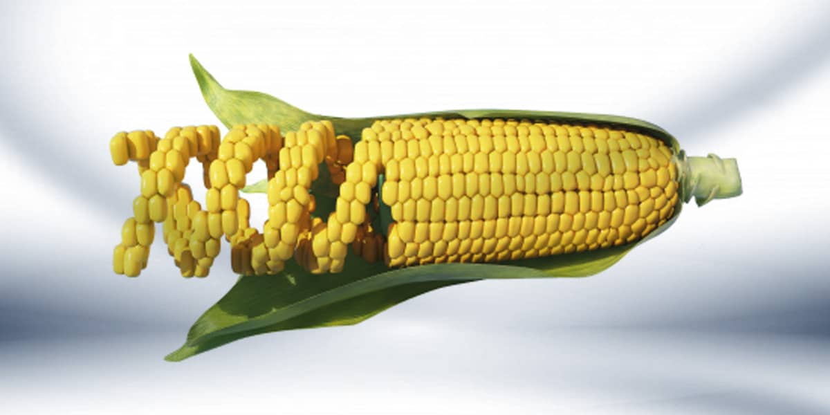 Webinar GMO